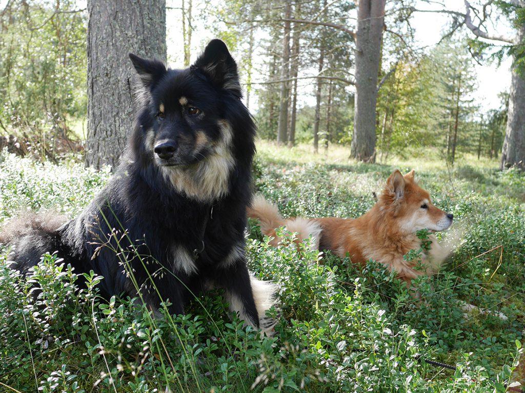 Mit Hund in Finnland