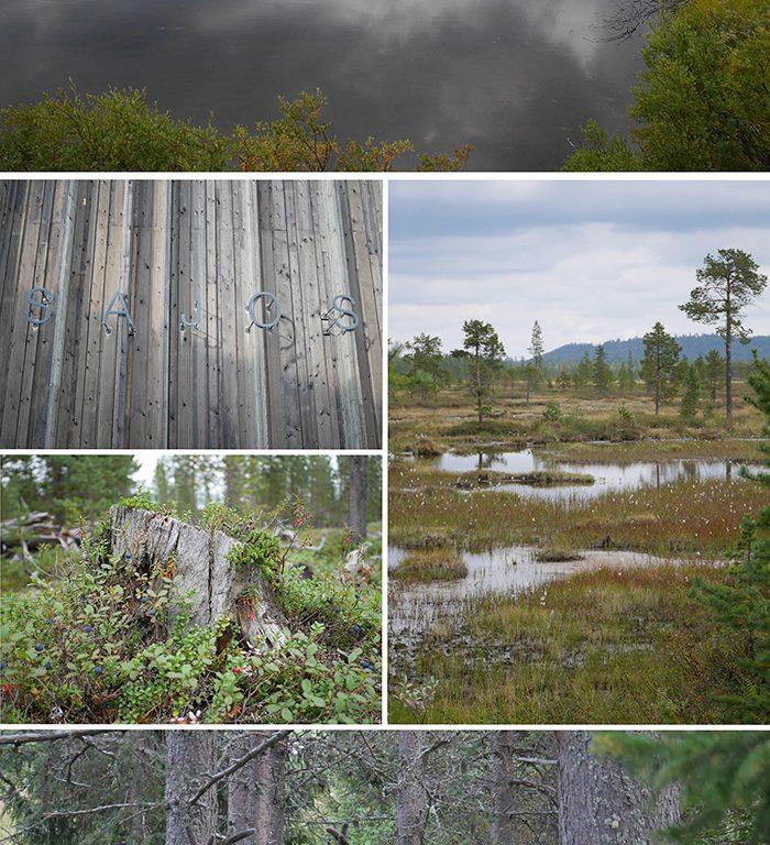 Lappland Landschaft