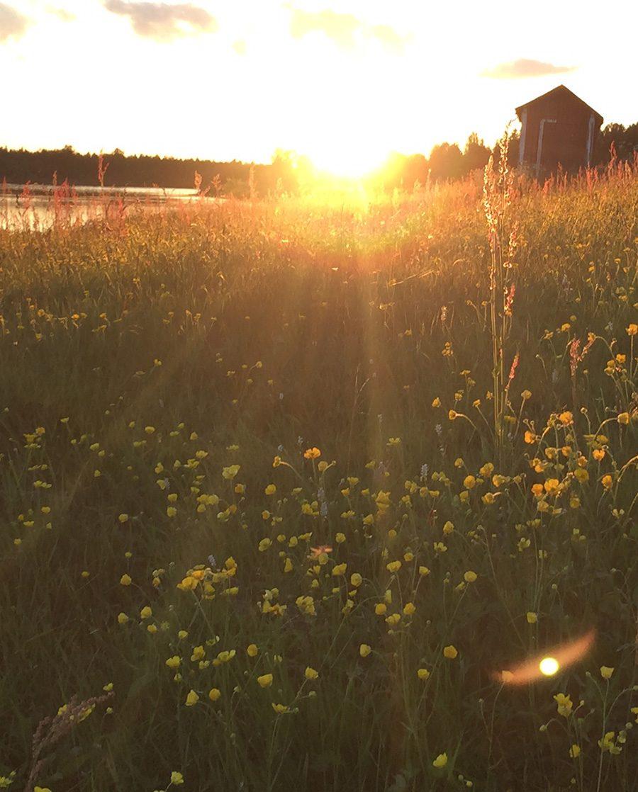 Mittsommer Lappland