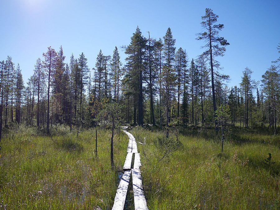 Lappland Sumpf