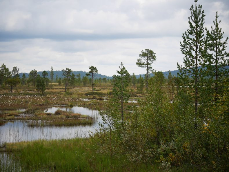 Sümpfe Lappland