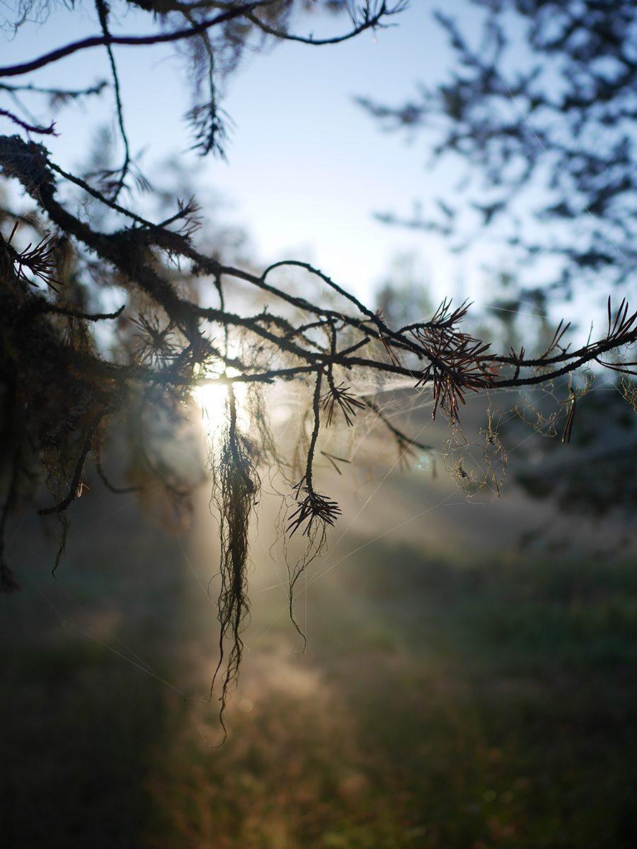 Lappland Herbstsonne
