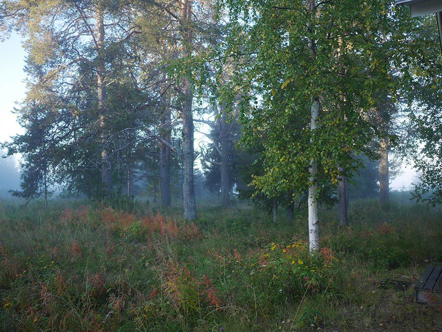Lappland Herbst