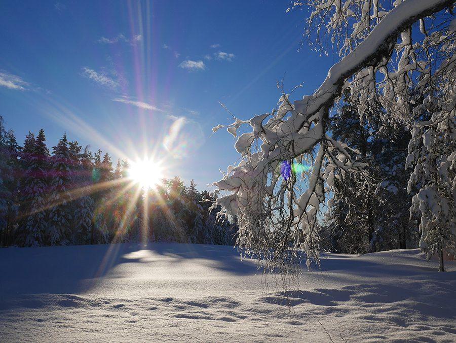 Lappland im Schnee