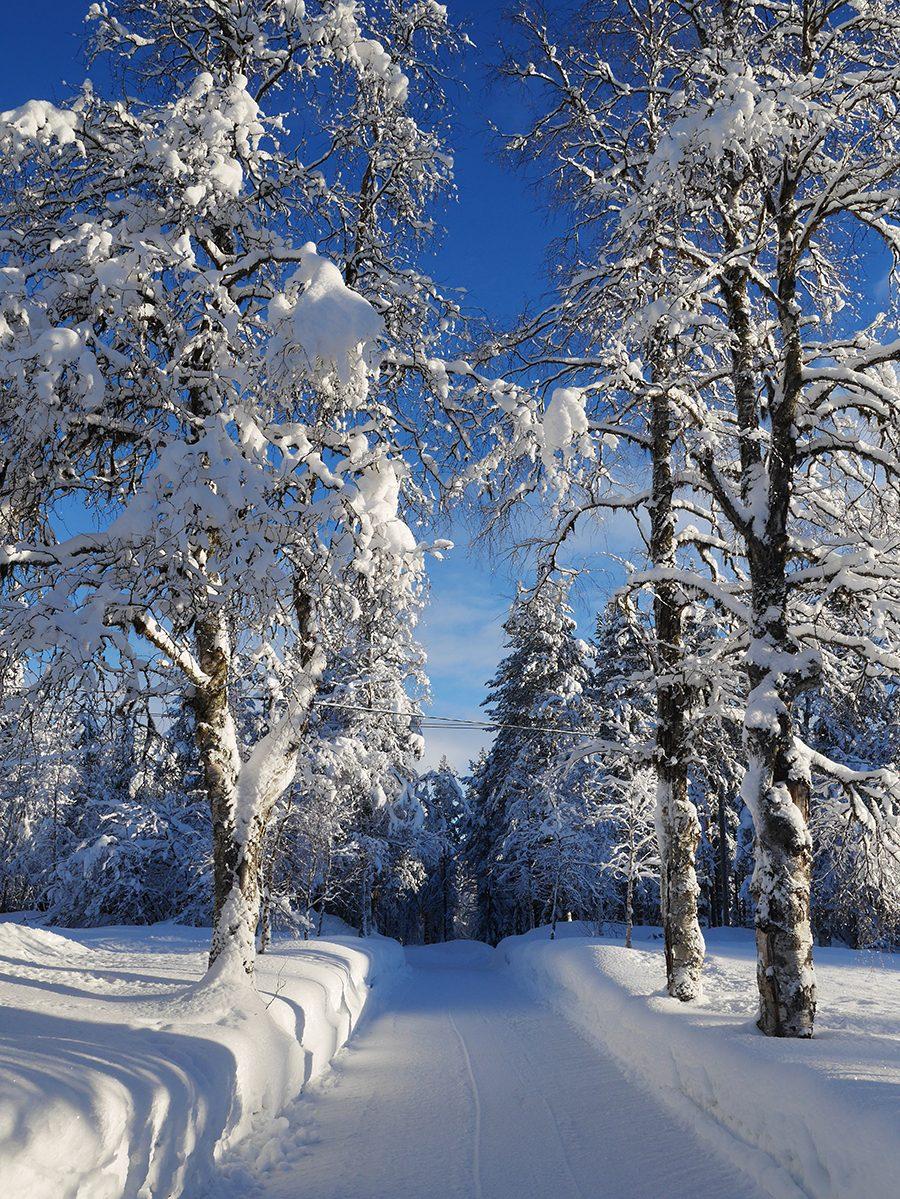 Winterlandschaft Lappland