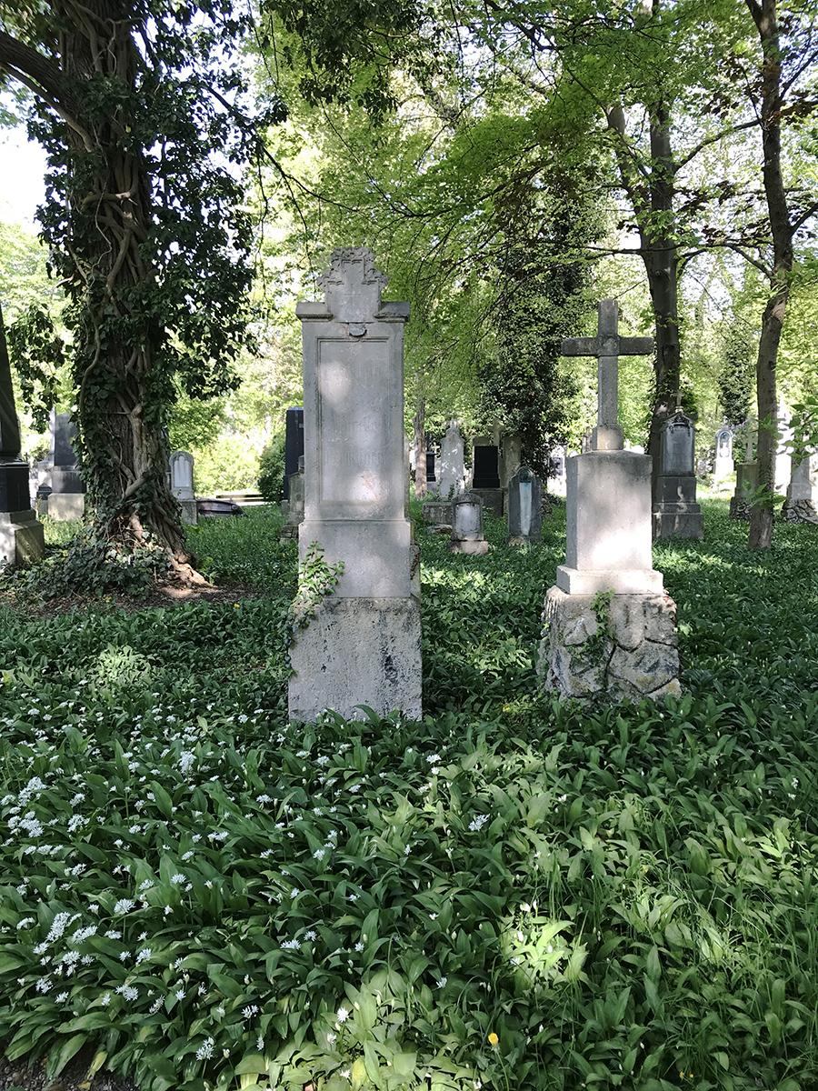 Bärlauch auf dem Friedhof