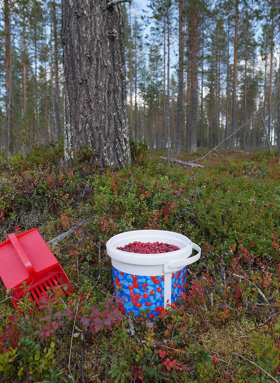 Beerenpflücken im Wald