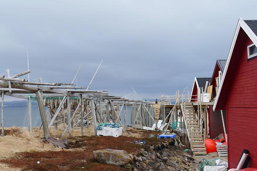Norwegen Trockenfisch