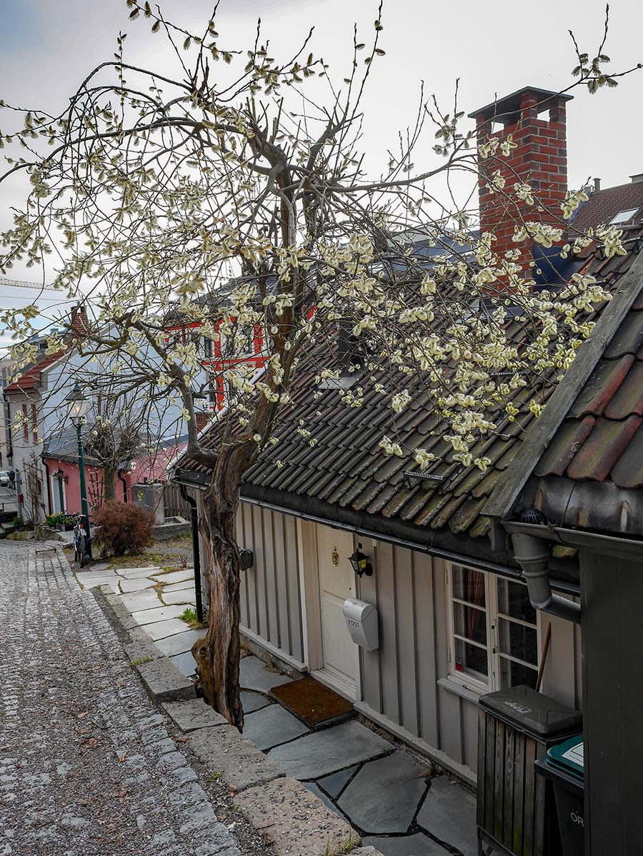 Frühling in Oslo